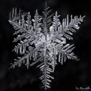 1d4-snowflake16