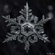 star-of-winter